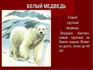 БЕЛЫЙ МЕДВЕДЬ Самый крупный медведь. Владыка Арктики, самый крупный на Земле
