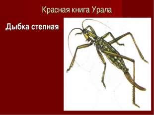 Красная книга Урала Дыбка степная