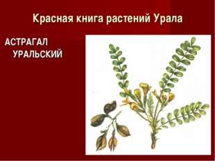 Красная книга растений Урала АСТРАГАЛ УРАЛЬСКИЙ
