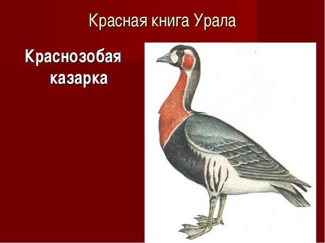 Красная книга Урала Краснозобая казарка