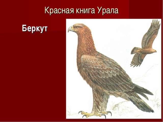 Красная книга Урала Беркут