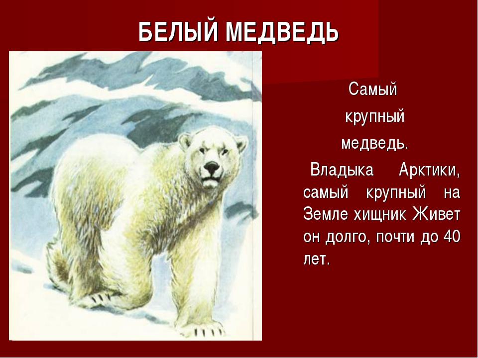 БЕЛЫЙ МЕДВЕДЬ Самый крупный медведь. Владыка Арктики, самый крупный на Земле...