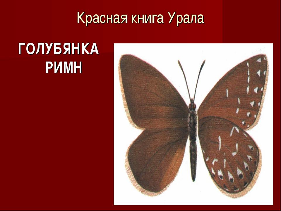 Красная книга Урала ГОЛУБЯНКА РИМН