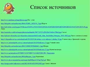 Список источников http://www.molomo.ru/img/utkonos.jpg Нос утки http://lifegl