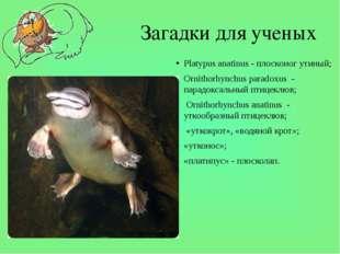 Загадки для ученых Platypus anatinus - плосконог утиный; Ornithorhynchus para