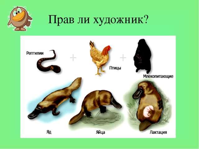 Прав ли художник? Проанализируйте таблицу «Рыбьи, земноводные, рептилии, птич...