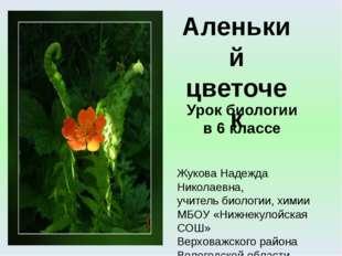 Урок биологии в 6 классе Жукова Надежда Николаевна, учитель биологии, химии М