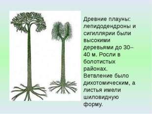 Древние плауны: лепидодендроны и сигиллярии были высокими деревьями до 30–40