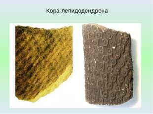 Кора лепидодендрона http://dic.academic.ru/pictures/wiki/files/84/Tronco_y_ra