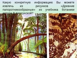Какую конкретную информацию Вы можете извлечь из рисунков «Древние папоротник