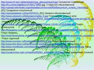 http://www.inf-red.ru/plants/salviniya_plavaushaya3.jpg Сальвиния плавающая h