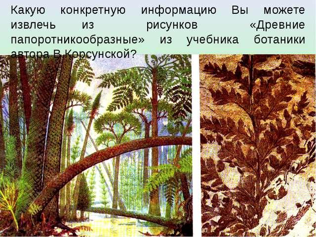 Какую конкретную информацию Вы можете извлечь из рисунков «Древние папоротник...
