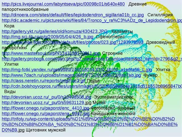 http://pics.livejournal.com/labyntseva/pic/00098c01/s640x480 Древние папоротн...