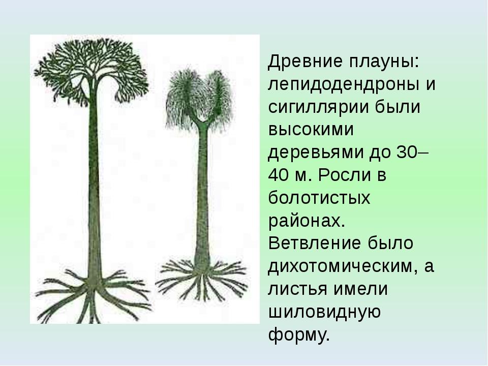 Древние плауны: лепидодендроны и сигиллярии были высокими деревьями до 30–40...