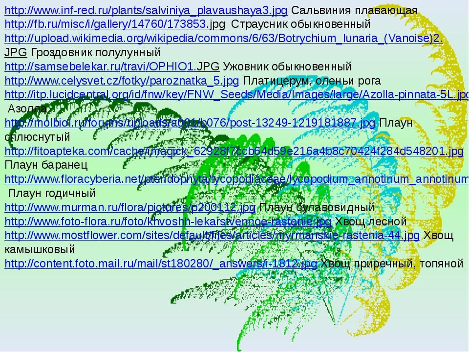 http://www.inf-red.ru/plants/salviniya_plavaushaya3.jpg Сальвиния плавающая h...