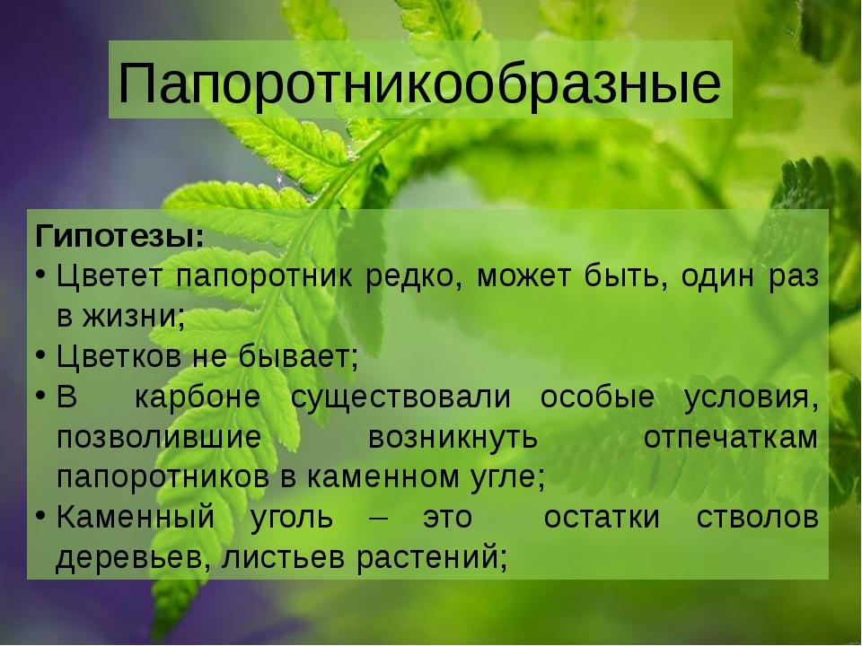 Папоротникообразные Гипотезы: Цветет папоротник редко, может быть, один раз в...