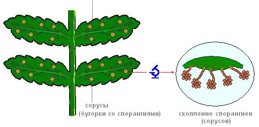 http://biouroki.ru/content/page/763/2.png