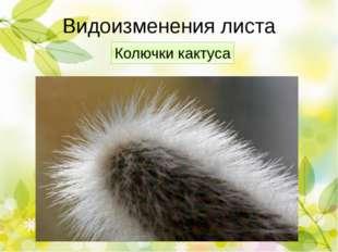 Проверим! Видоизменения корней Функция Корни-присоски омелы Удержание на ство