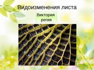 Растение-людоед Проблема: существует ли в реальной жизни растение -хищник? Ги