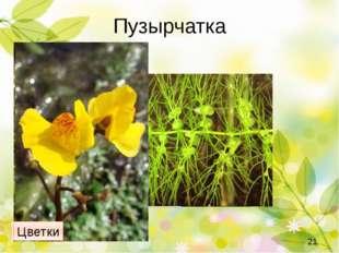 Росолист Другое растение растет по склонам сухих каменистых и песчаных холмов
