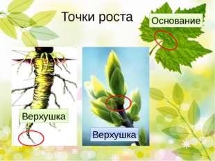 Клеточное строение листа Хлоропласты Клеточное строение листа В листе – орган