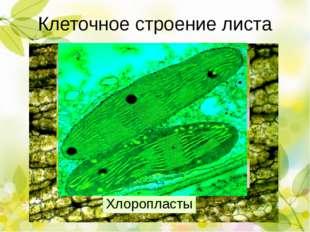 Процессы, происходящие в листе Фотосинтез Рост Испарение воды (транспирация)