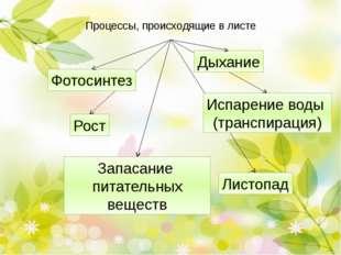 Прикрепление листа к стеблю Прикрепление листа к стеблю. Вспомните филлоклади
