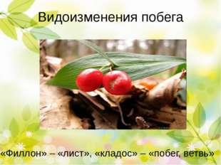 Видоизменения листа Колючки барбариса Колючки кактуса Усики гороха Усики огур