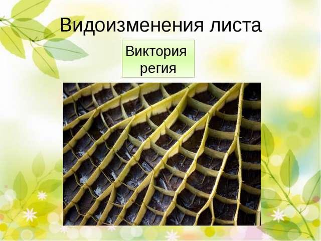 Растение-людоед Проблема: существует ли в реальной жизни растение -хищник? Ги...