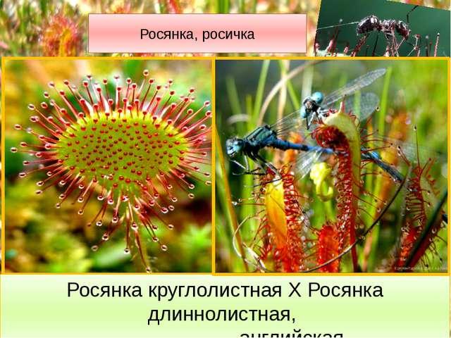 Жирянка Жирянка обыкновенная относится к исчезающим растениям. В народе жирян...
