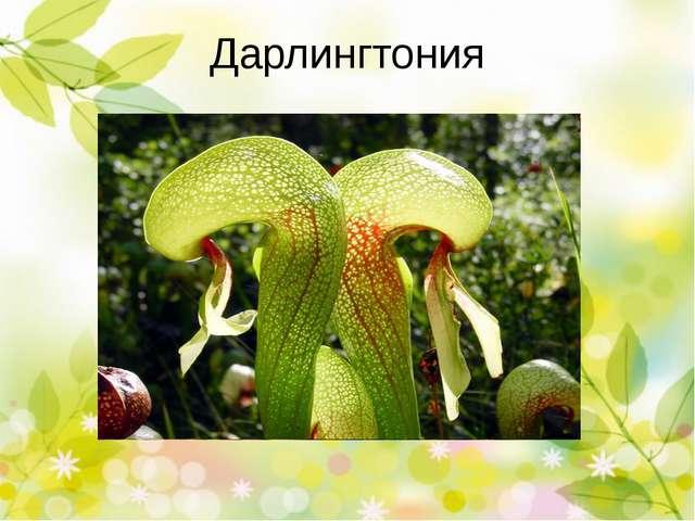 Типы насекомоядных растений Хватающие Приклеивающие Ждущие Почему же они хищн...