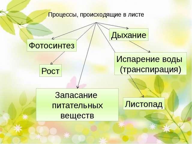 Прикрепление листа к стеблю Прикрепление листа к стеблю. Вспомните филлоклади...