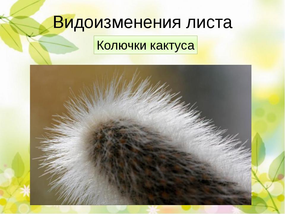 Проверим! Видоизменения корней Функция Корни-присоски омелы Удержание на ство...