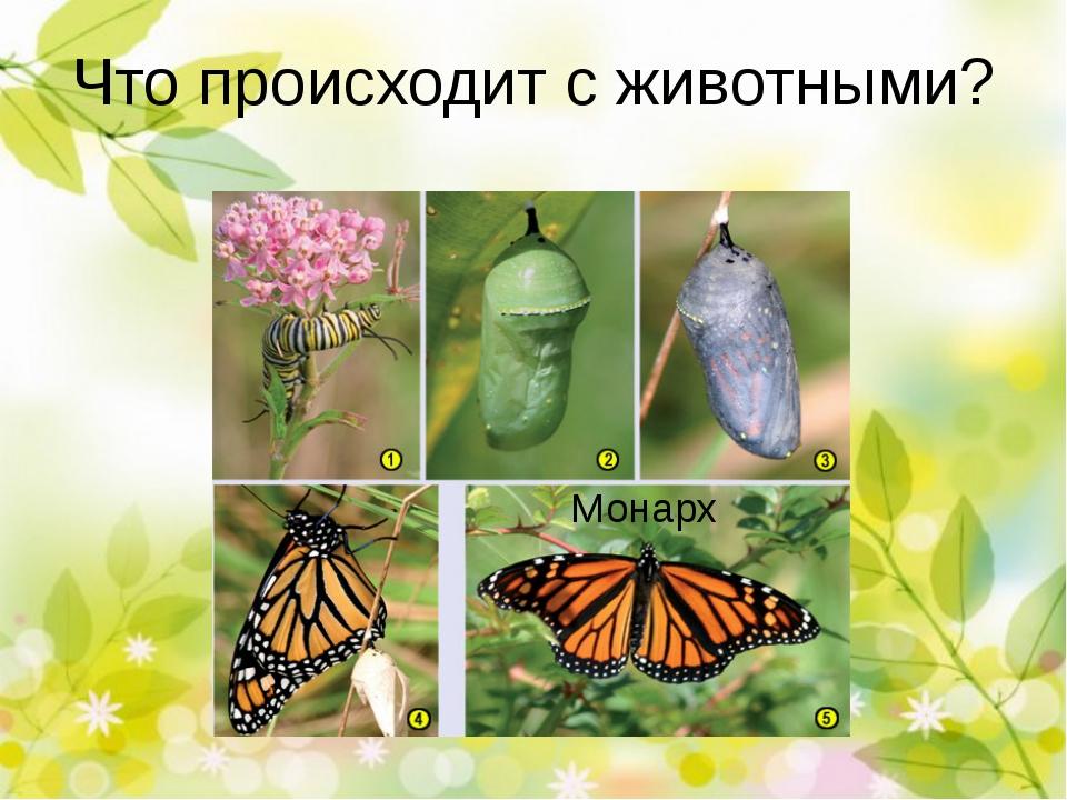 Что происходит с животными? Лягушка Монарх А что происходит с животными: лягу...