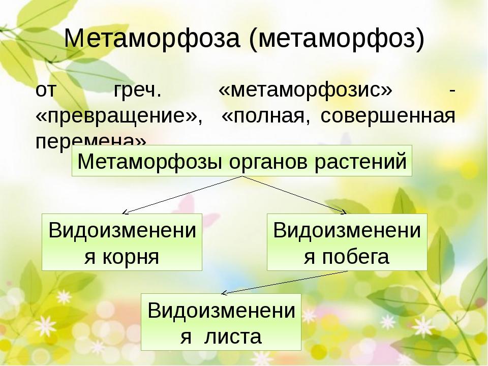 Метаморфоза (метаморфоз) от греч. «метаморфозис» - «превращение», «полная, со...