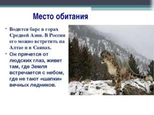 Место обитания Водится барс в горах Средней Азии. В России его можно встрети