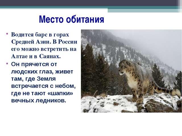 Место обитания Водится барс в горах Средней Азии. В России его можно встрети...