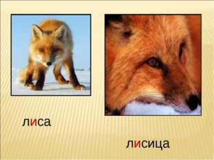лиса лисица