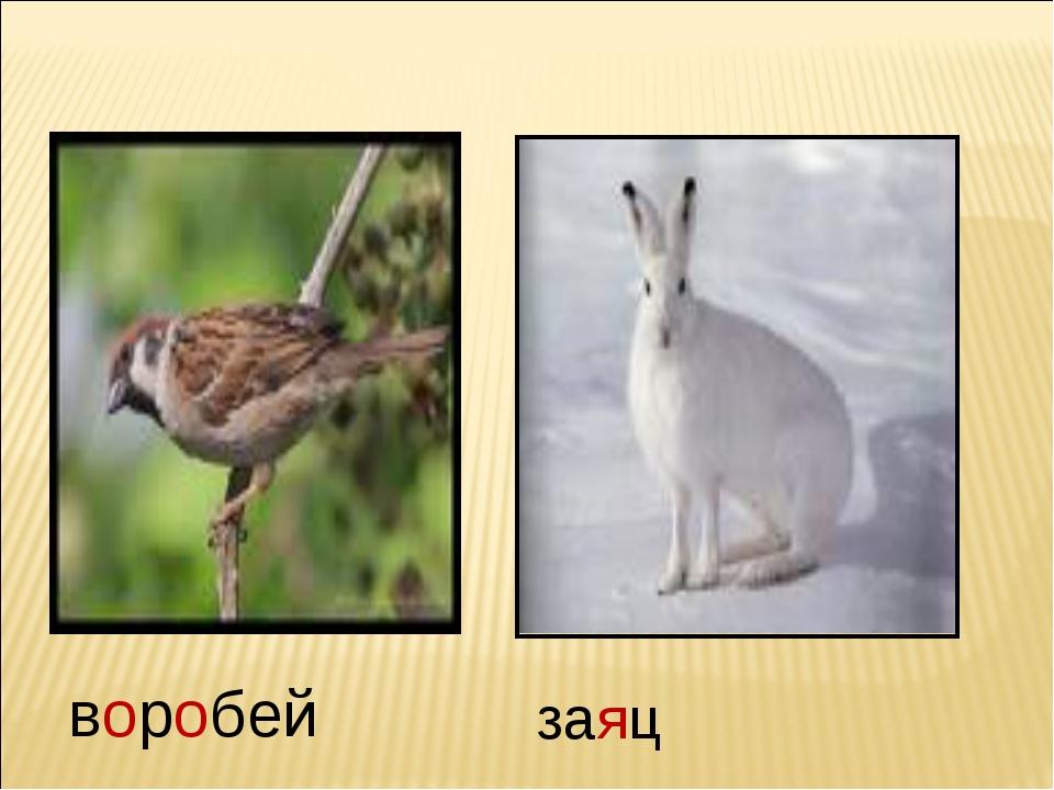 воробей заяц