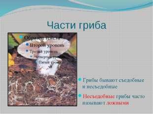 Части гриба Грибы бывают съедобные и несъедобные Несъедобные грибы часто назы
