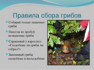 Правила сбора грибов Собирай только знакомые грибы Никогда не пробуй незнаком
