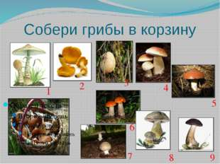 Собери грибы в корзину 1 2 3 4 5 6 7 8 9