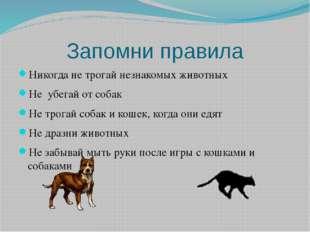 Запомни правила Никогда не трогай незнакомых животных Не убегай от собак Не т