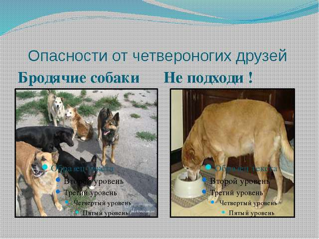 Опасности от четвероногих друзей Бродячие собаки Не подходи !