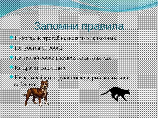Запомни правила Никогда не трогай незнакомых животных Не убегай от собак Не т...
