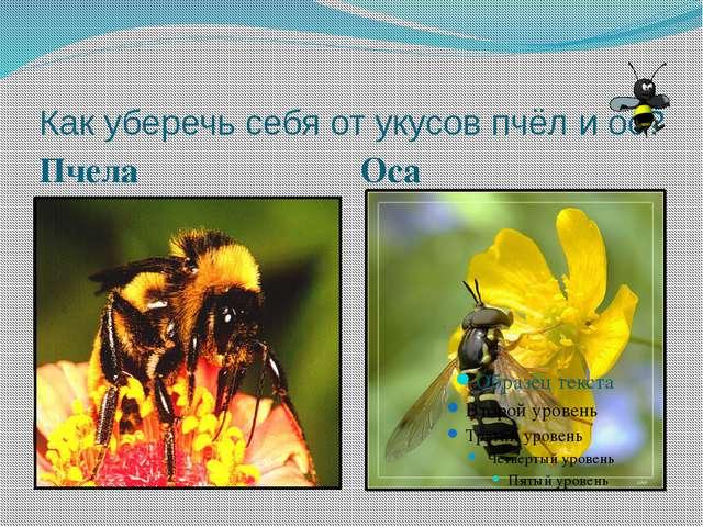 Как уберечь себя от укусов пчёл и ос? Пчела Оса
