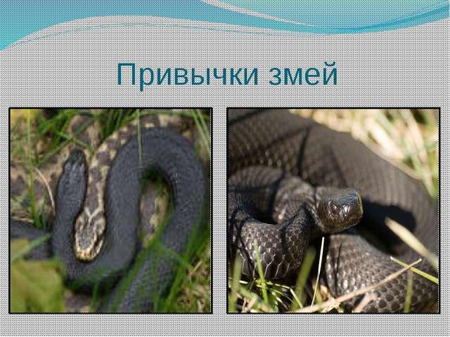 Привычки змей