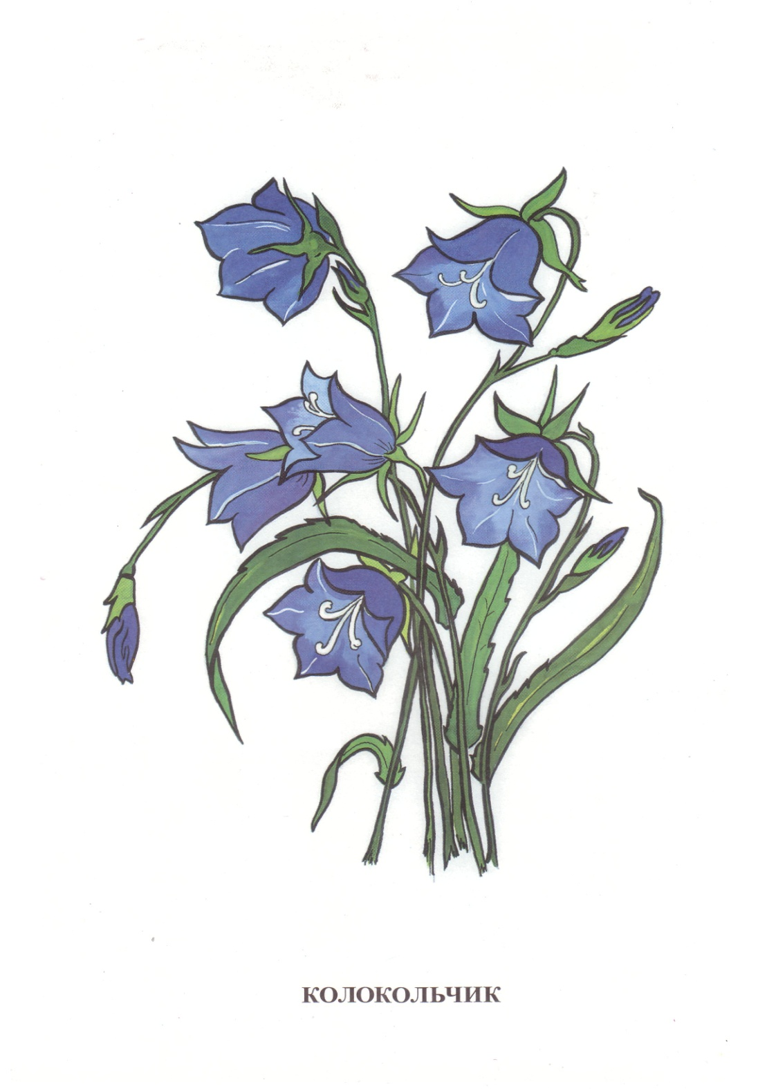 D:\школа 8 вида\Дидакт. материал картинки\Vohrinceva_полевые цветы\Vohrinceva_полевые цветы\1-17.jpg