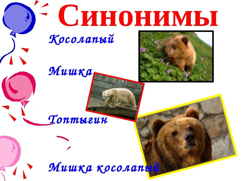 Синонимы Косолапый Мишка Топтыгин Мишка косолапый