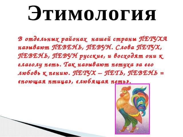 Этимология В отдельных районах нашей страны ПЕТУХА называют ПЕВЕНЬ, ПЕВУН. Сл...